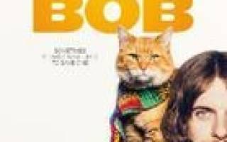 Фильмы про кошек: ТОП-32 художественных и документальных