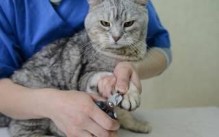 Как подстричь когти кошке в домашних условиях самому: правила и лайфхаки