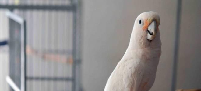 Самые дорогие и редкие попугаи в мире