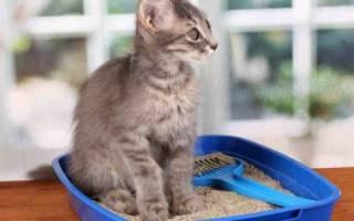 Антигадин для кошек: как сделать своими руками, ТОП 7 покупных