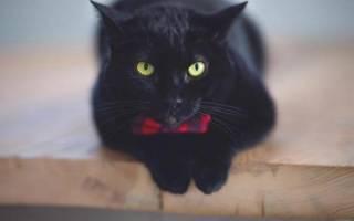 День черной кошки: когда отмечают в России и других странах