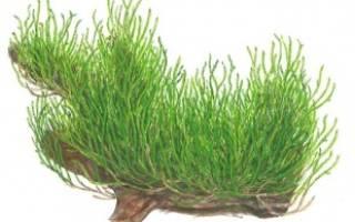 Все об искусственных растениях для аквариума, примеры оформления: кораллами, корягами, камнями, водорослями