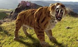 Кто такой саблезубый тигр или кот: род, жизнь и вымирание, фото