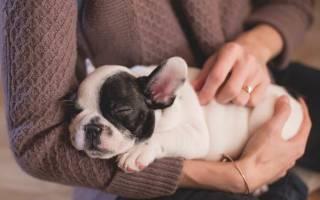 Конъюнктивит у собак: симптомы и лечение