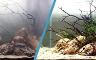 Мутный аквариум: от чего и почему мутнеет вода, что делать?