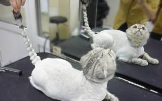 Стрижка (груминг) кошек: какие бывают, можно ли сделать самому