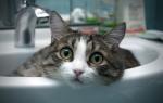 Когда и как купать кошку или кота: правила, 5 шагов и 6 средств