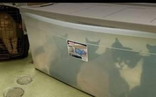 Сотрудники нашли 14 брошенных около приюта контейнеров с кошками