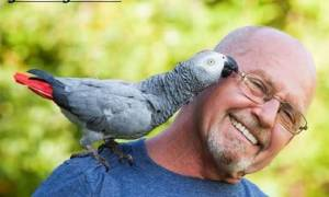Попугай жако: описание птицы, виды, характер
