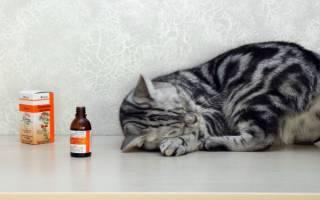 Почему коты и кошки любят валерьянку и как она на них действует?