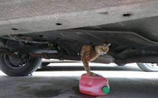 Как котенка спасли из-под капота автомобиля