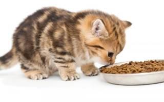 Как воспитывать котенка, кота, кошку в домашних условиях: 22 совета