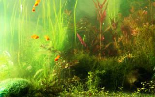 Почему из аквариума идет неприятный запах, как избавится?