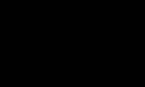 Жесты волнистых попугаев — как понять?