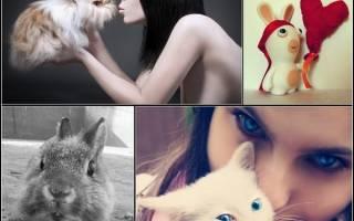 Дружба котиков и крольчат: забаная gif и фото подборка