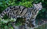 Семейство кошачьих: 48 представителей, 90 фото с названиями