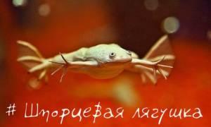 Аквариумные черепахи, лягушки: описание, содержание, фото-видео обзор