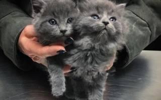 Счастливая история спасения новорожденных котят
