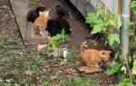 Рабочие автомастерской спасли маленьких котят