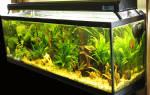 Полезные материалы по аквариумистике