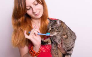 Как почистить коту и кошке зубы в домашних условиях: советы хозяину