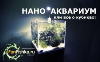 Нано аквариум или все о кубиках: запуск, оформление, выбор рыбок и растений, фото-видео обзор