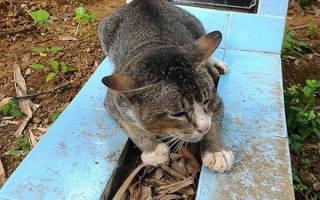 История преданности: год кошка не покидает могилу умершей хозяйки