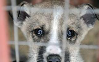 Приюты для бездомных животных Москвы и Московской области
