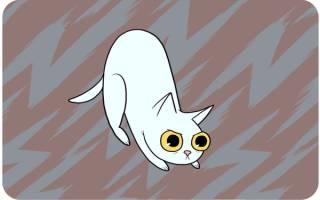 Почему на самом деле кошка виляет хвостом: ГИФ демонастрация