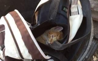 Кот, найденный в закрытом рюкзаке и его вторая жизнь
