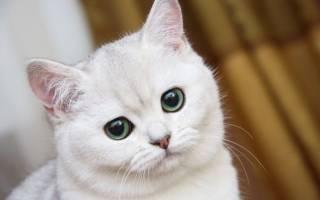 Сколько раз в день кормить кошку и котенка: 7 факторов и возраст