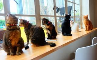 Знают ли кошки свое имя: эксперимент ученых. выводы