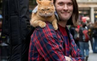 О котике по имени Боб, которому помогли волонтеры