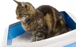 Корма для кошек при запорах: как давать, за чем нужно следить, ТОП