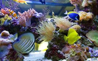 Виды аквариумов с фото и описанием