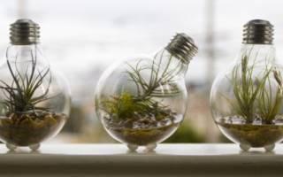 Освещение аквариума и выбор ламп, какие лучше выбрать?