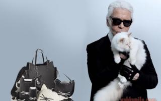 Котики и мода: что главнее, одежда, аксессуары или прическа (GIF)