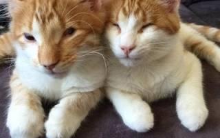 Слепые котята спасены от гибели на улицах города