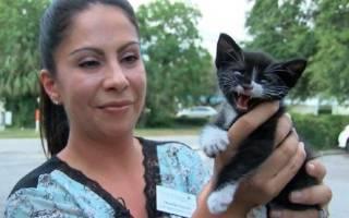 История спасенного котенка, выброшенного из движущейся машины